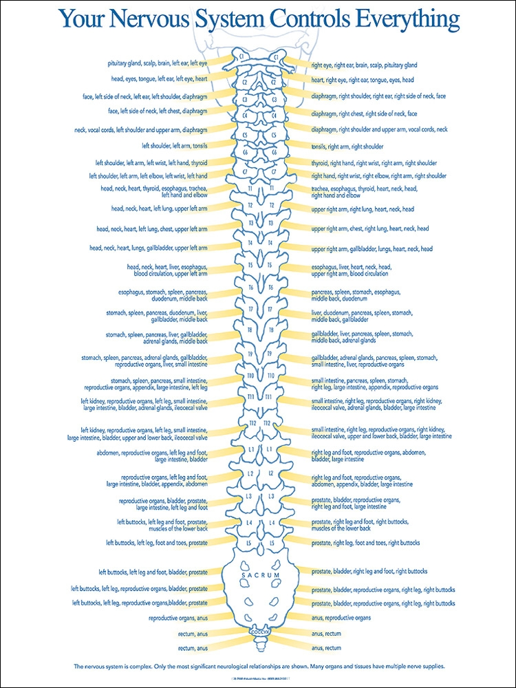 Nervous System Chart Chiropractic Charts Patient Media Posters