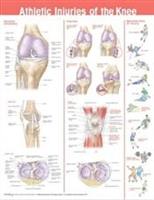 Athletic Injuries of the Knee Anatomical Chart 20X26