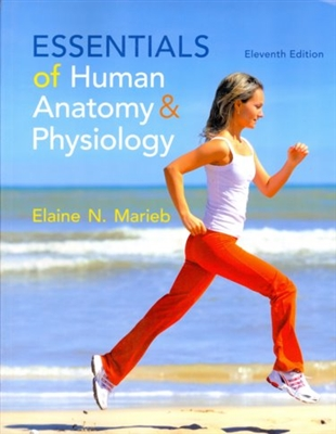 Essentials of Human Anatomy & Physiology