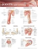 Joints of the Upper Extremities  20x26 Laminated Chart.