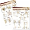 Lippincott Williams & Wilkins Atlas of Anatomy Skeletal System Chart Set. 2 Laminated Charts