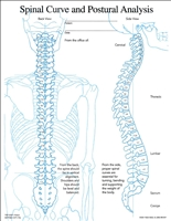 Posture and Spinal Curve Insert