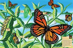 48pc Life Cycle of a Monarch Butterfly jigsaw puzzle | Cobble Hill Puzzle Company