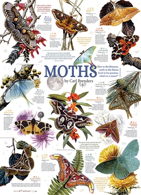 1000pc Moth Collection jigsaw puzzle | 80016 | Cobble Hill Puzzle Co