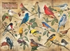 1000pc Popular Backard Wild Birds of North America jigsaw puzzle | 80024 | Cobble Hill Puzzle Co