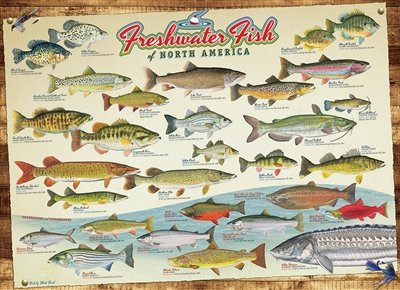1000pcFreshwater Fish of North America jigsaw puzzle | 80094 | Cobble Hill Puzzle Co
