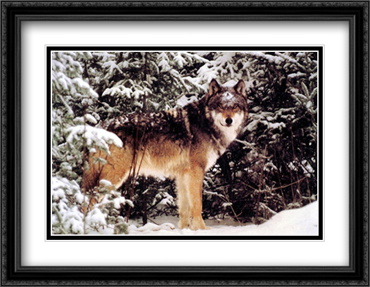 Winter Wolf 2x Matted 28x22 Large Gold or Black or Gold Ornate Framed Art Print by Jim Brandenburg