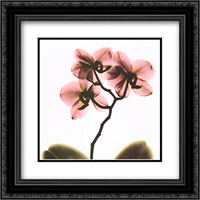 Crystal Flowers X-Ray, Orchid 2x Matted 16x16 Black Ornate Framed Art Print by Albert Koetsier