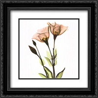 Crystal Flowers X-Ray, Gentian 2x Matted 16x16 Black Ornate Framed Art Print by Albert Koetsier