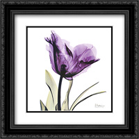 X-ray Royal Purple Parrot Tulip 2x Matted 16x16 Black Ornate Framed Art Print by Albert Koetsier