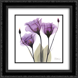 X-ray Royal Purple Gentian 2x Matted 16x16 Black Ornate Framed Art Print by Albert Koetsier