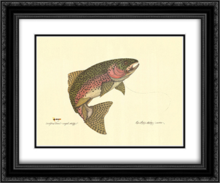 Rainbow Trout 2x Matted 20x24 Black Ornate Framed Art Print by Terri Blehm
