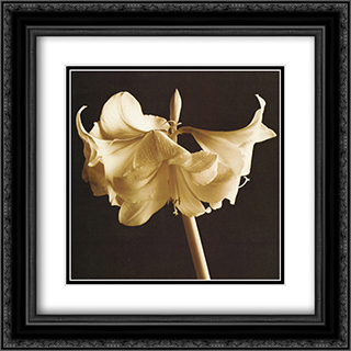 Amaryllis 2x Matted 20x24 Black Ornate Framed Art Print by Michael Harrison
