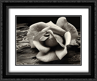 Rose and Driftwood 2x Matted 24x20 Black Ornate Framed Art Print by Ansel Adams