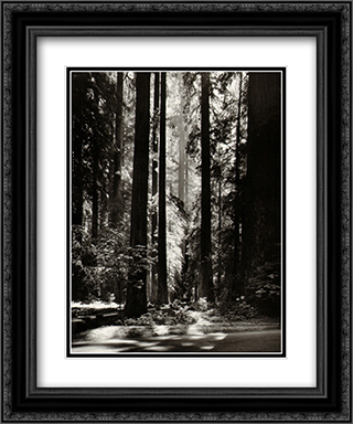 Redwoods, Founders Grove 2x Matted 20x24 Black or Gold Ornate Framed Art Print by Ansel Adams