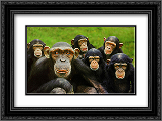 Chimpanzees 2x Matted 20x16 Black or Gold Ornate Framed Art Print by Steve Bloom