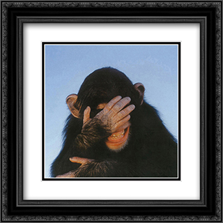 Embarrassed Chimpanzee 2x Matted 20x16 Black or Gold Ornate Framed Art Print by Tim Davis