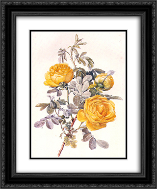 Botanical Illustration 20x24 Black or Gold Ornate Framed and Double Matted Art Print by Alfred Parsons