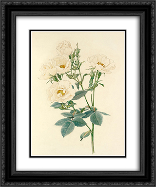 Rosa alba 20x24 Black or Gold Ornate Framed and Double Matted Art Print by Alfred Parsons