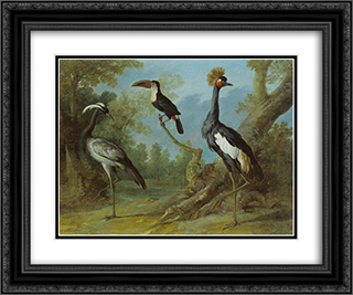 Demoiselle Crane, Toucan, and Tufted Crane 24x20 Black or Gold Ornate Framed and Double Matted Art Print by Jean Baptiste Oudry