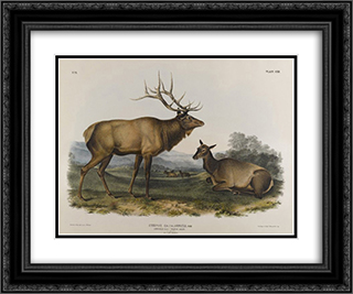 American Elk 24x20 Black or Gold Ornate Framed and Double Matted Art Print by John James Audubon