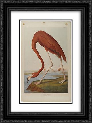 American Flamingo 18x24 Black or Gold Ornate Framed and Double Matted Art Print by John James Audubon