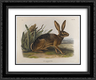 California Hare 24x20 Black or Gold Ornate Framed and Double Matted Art Print by John James Audubon
