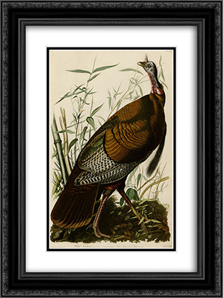 Plate 1. Wild Turkey 18x24 Black or Gold Ornate Framed and Double Matted Art Print by John James Audubon