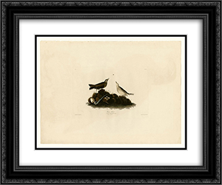 Plate 10. Brown Titlark 24x20 Black or Gold Ornate Framed and Double Matted Art Print by John James Audubon