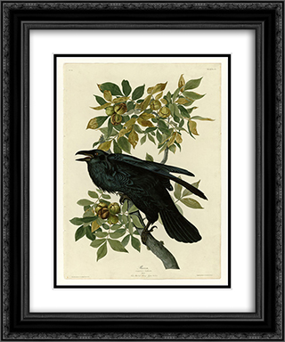 Plate 101 Raven 20x24 Black or Gold Ornate Framed and Double Matted Art Print by John James Audubon