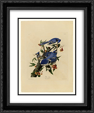 Plate 102 Blue Jay 20x24 Black or Gold Ornate Framed and Double Matted Art Print by John James Audubon