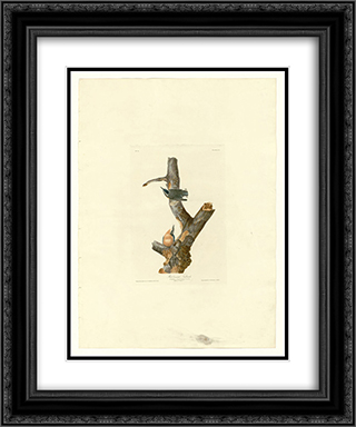 Plate 105 Red-breasted Nuthatch 20x24 Black or Gold Ornate Framed and Double Matted Art Print by John James Audubon