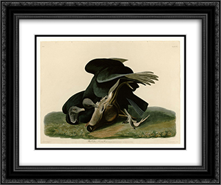 Plate 106 Black Vulture or Carrion Crow 24x20 Black or Gold Ornate Framed and Double Matted Art Print by John James Audubon