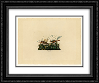 Plate 108 Fox-coloured Sparrow 24x20 Black or Gold Ornate Framed and Double Matted Art Print by John James Audubon