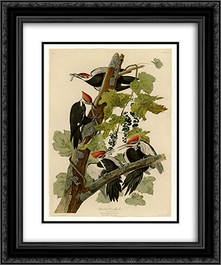 Plate 111 Pileated Woodpecker 20x24 Black or Gold Ornate Framed and Double Matted Art Print by John James Audubon