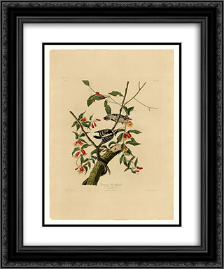 Plate 112 Downy Woodpecker 20x24 Black or Gold Ornate Framed and Double Matted Art Print by John James Audubon