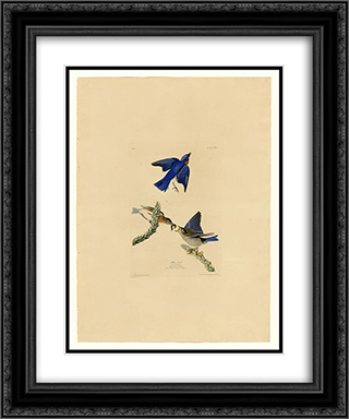 Plate 113 Blue-bird 20x24 Black or Gold Ornate Framed and Double Matted Art Print by John James Audubon