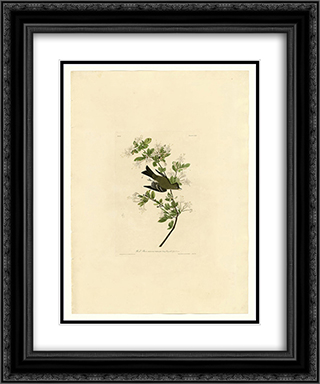 Plate 115 Wood Pewee 20x24 Black or Gold Ornate Framed and Double Matted Art Print by John James Audubon