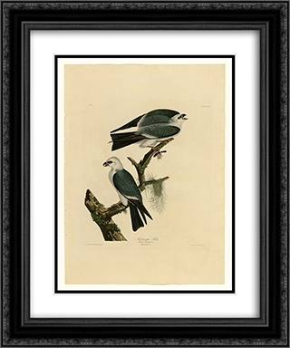 Plate 117 Mississippi Kite 20x24 Black or Gold Ornate Framed and Double Matted Art Print by John James Audubon