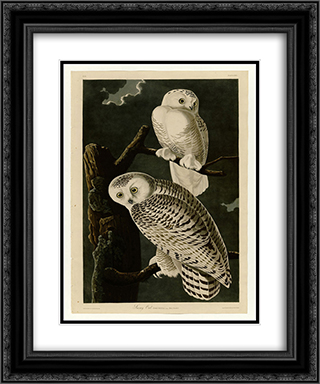 Plate 121 Snowy Owl 20x24 Black or Gold Ornate Framed and Double Matted Art Print by John James Audubon