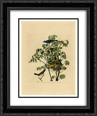 Plate 122 Blue Grosbeak 20x24 Black or Gold Ornate Framed and Double Matted Art Print by John James Audubon
