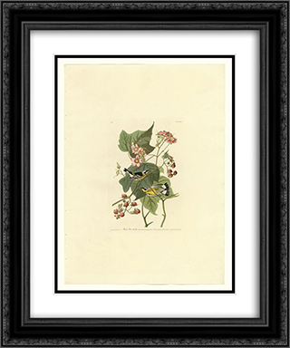Plate 123 Black & Yellow Warblers 20x24 Black or Gold Ornate Framed and Double Matted Art Print by John James Audubon