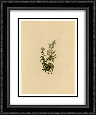 Plate 124 Green Black-capt Flycatcher 20x24 Black or Gold Ornate Framed and Double Matted Art Print by John James Audubon