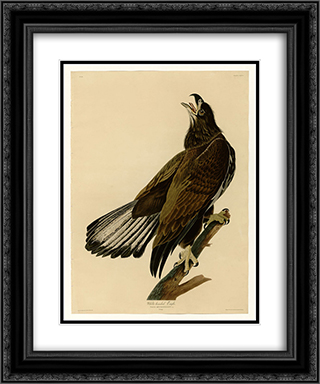 Plate 126 White-headed Eagle 20x24 Black or Gold Ornate Framed and Double Matted Art Print by John James Audubon