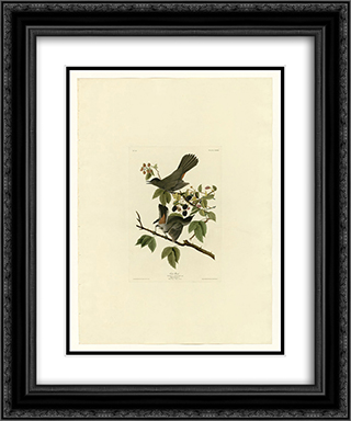 Plate 128 Cat Bird 20x24 Black or Gold Ornate Framed and Double Matted Art Print by John James Audubon