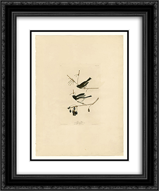 Plate 13. Snow Bird 20x24 Black or Gold Ornate Framed and Double Matted Art Print by John James Audubon