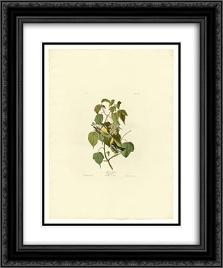 Plate 134 Hemlock Warbler 20x24 Black or Gold Ornate Framed and Double Matted Art Print by John James Audubon