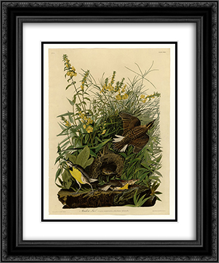 Plate 136 Meadow Lark 20x24 Black or Gold Ornate Framed and Double Matted Art Print by John James Audubon