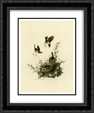 Plate 137 Yellow-breasted Chat 20x24 Black or Gold Ornate Framed and Double Matted Art Print by John James Audubon