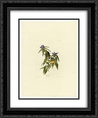 Plate 138 Connecticut Warbler 20x24 Black or Gold Ornate Framed and Double Matted Art Print by John James Audubon